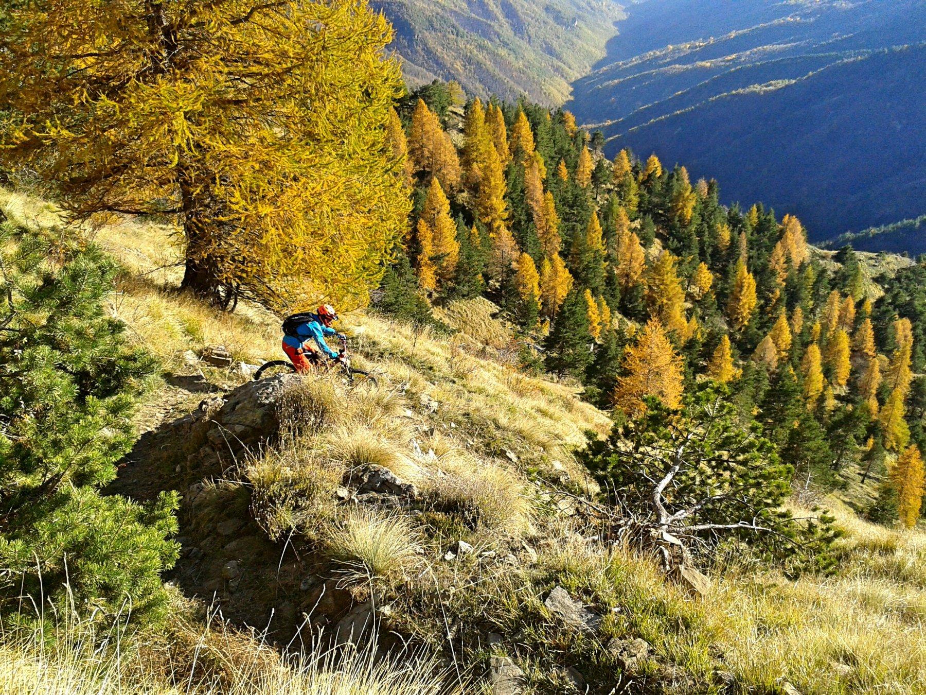 Frontè (Monte) da Molini di Triora per il passo della Guardia, Colle Garezzo e Passo Garlenda 2015-11-08