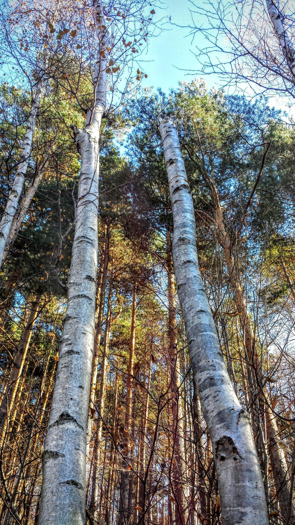 boschi vicino a colle dell'eremita