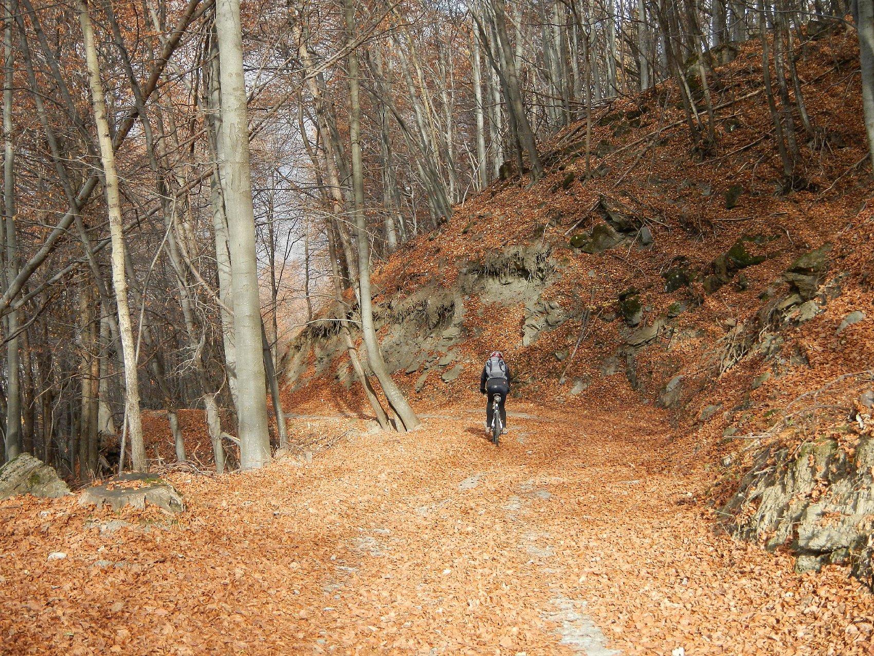 la faggeta attraversata con la pista forestale Bosco Nero