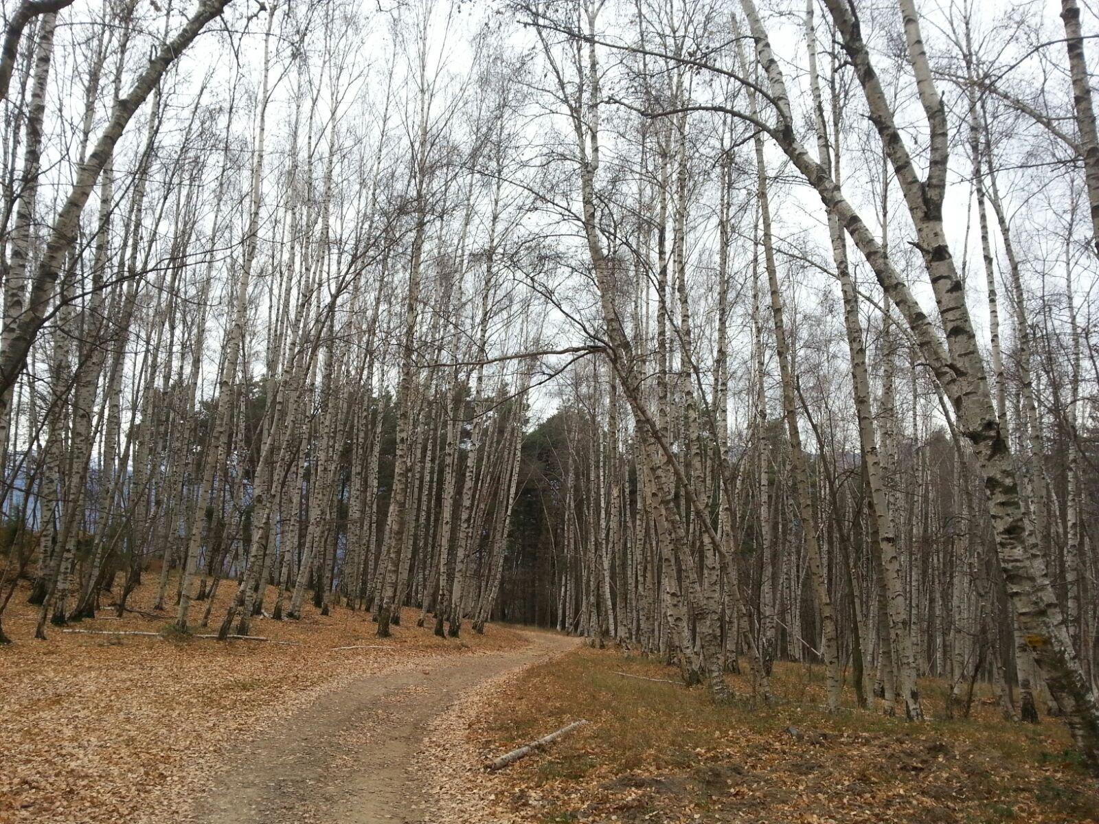 il bellissimo bosco