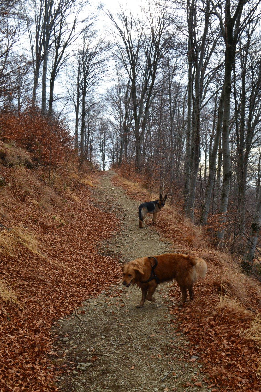 sul sentiero in falsopiano che riporta all'Alpe Fontana