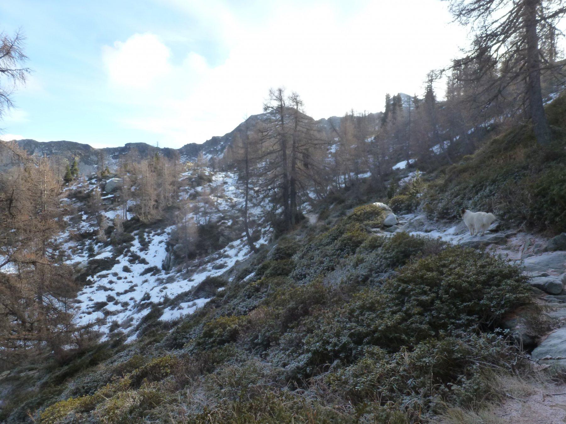 un po' di neve verso il Coda