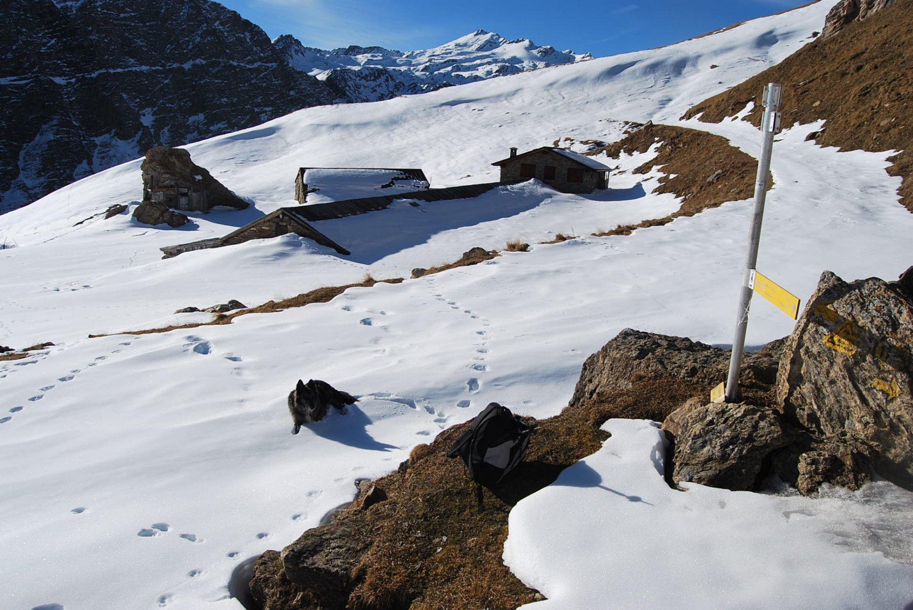 Alpeggi Chavannes damon con la Punta Lechaud sullo sfondo