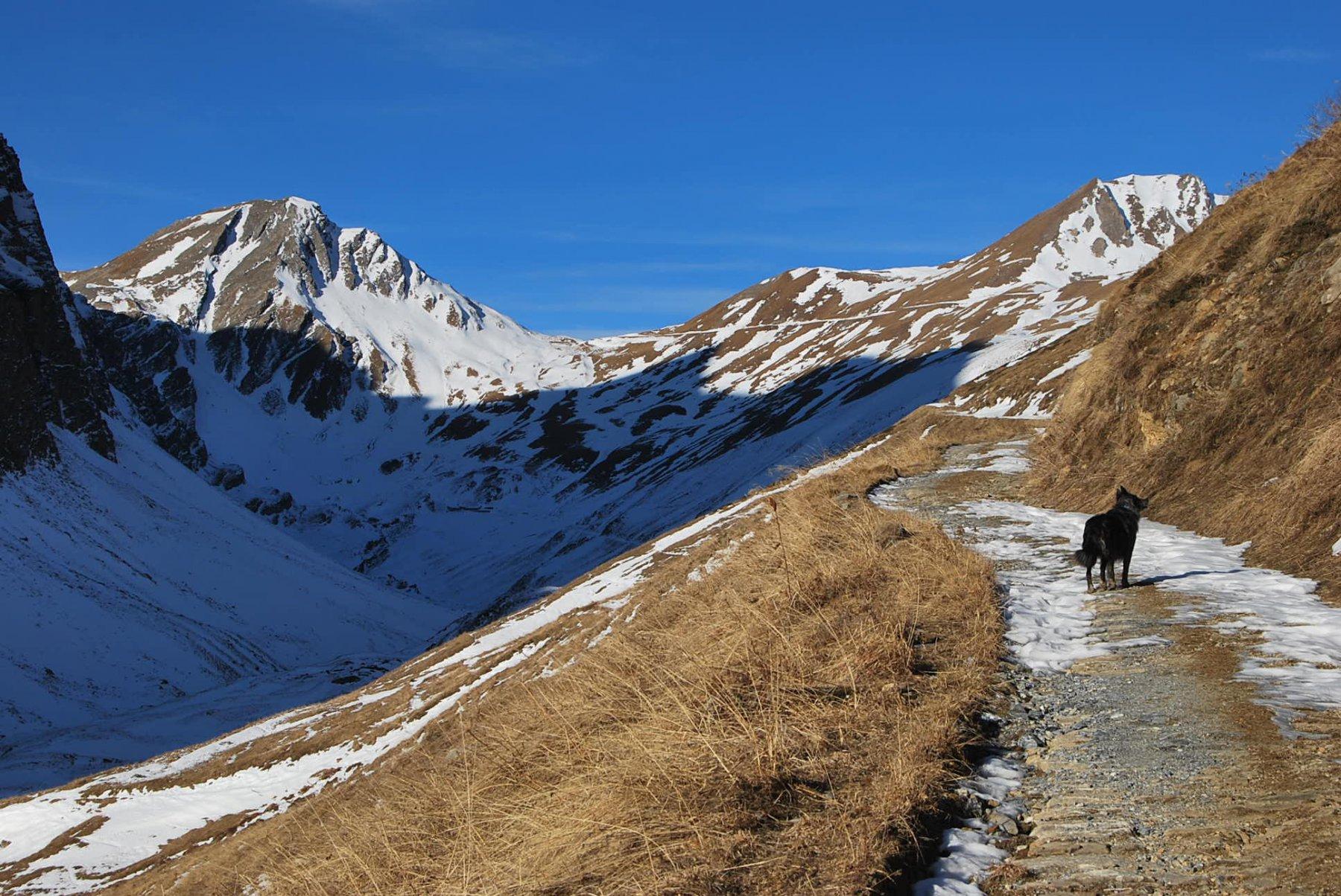 Nel vallone: vista Mont Lechaud, Trelatete e Frank