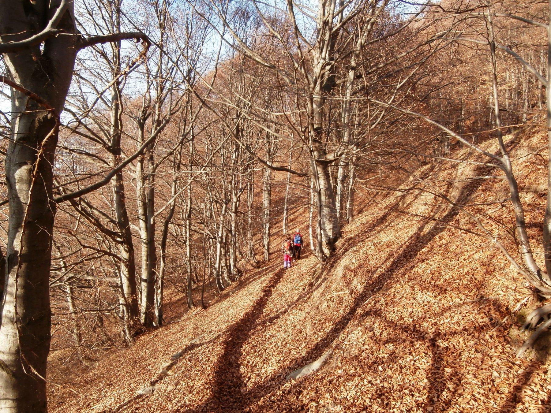 Alpet (Monte) da Prà di Roburent 2015-12-29