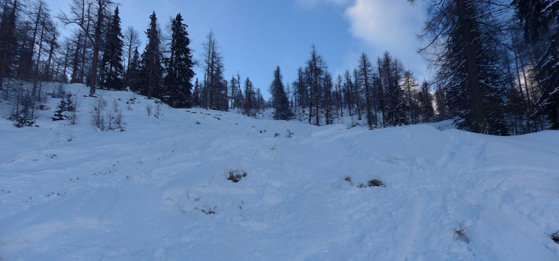 neve ce n'è, basta scansare gli arbusti...