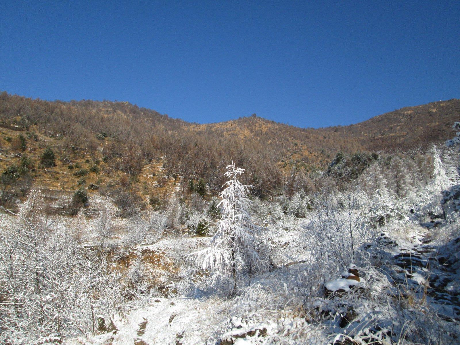neve in basso, erba in alto...