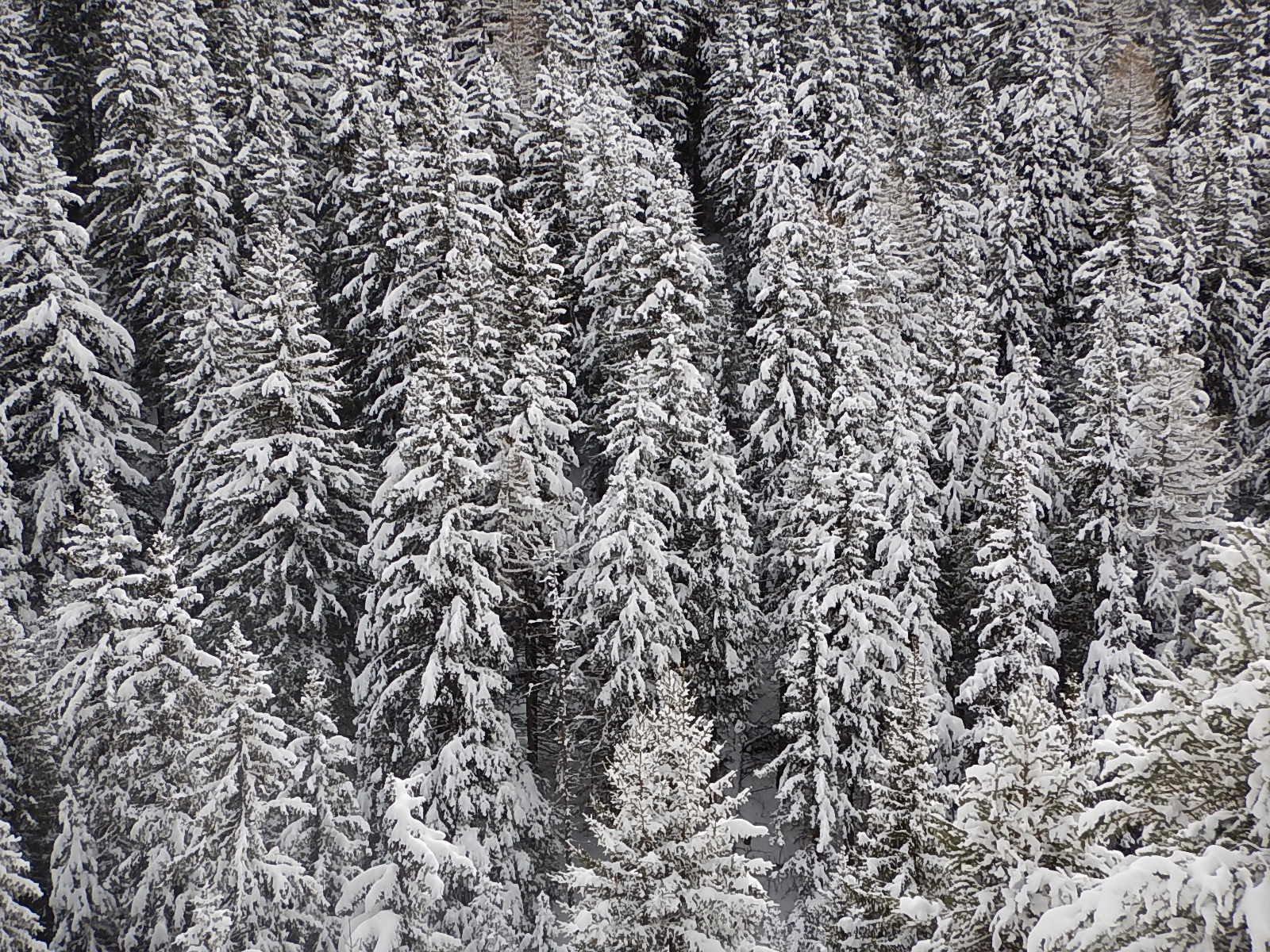 Canada in valle d'Aosta