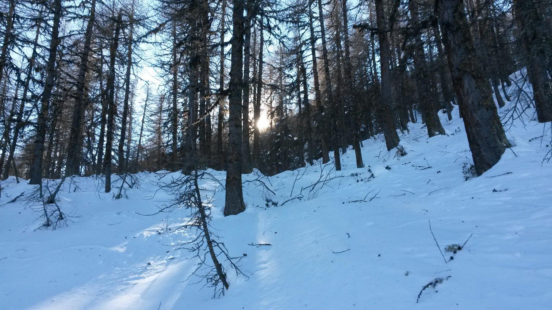Salita nel bosco sopra Fontaine Froide