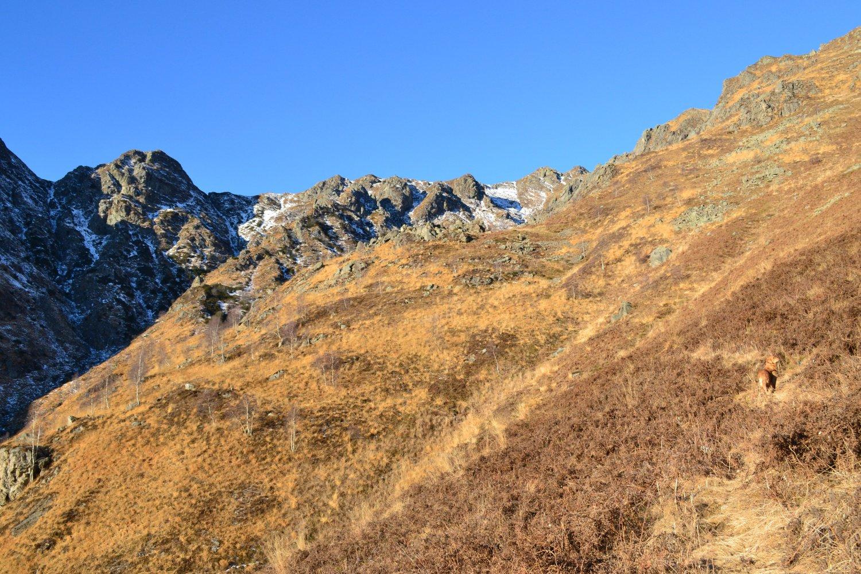 l'ampio pascolo salendo all'Alpe Buggie