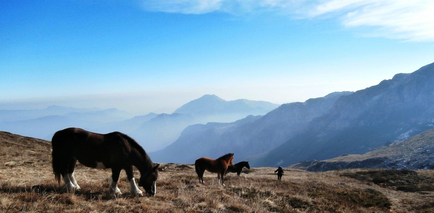 Cavalli in libertà invernale