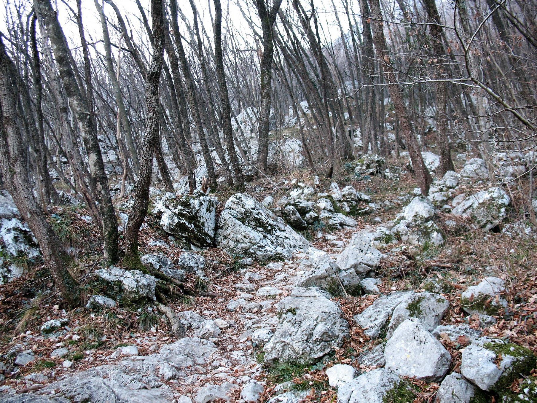 Bosco di rocce