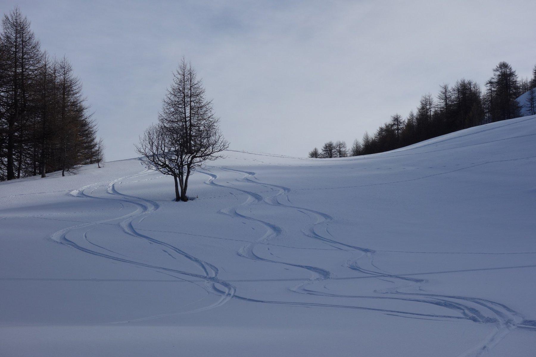 bosco dell'Alpette