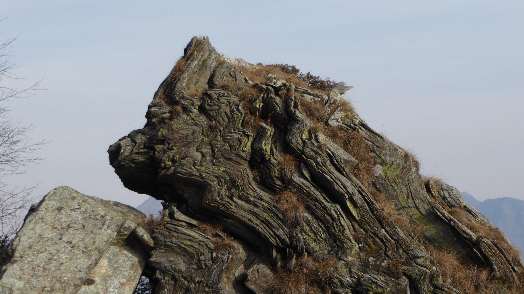 spunta una testa dal roc