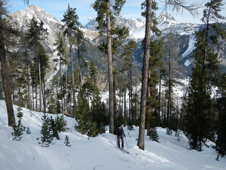 parte alta del bosco