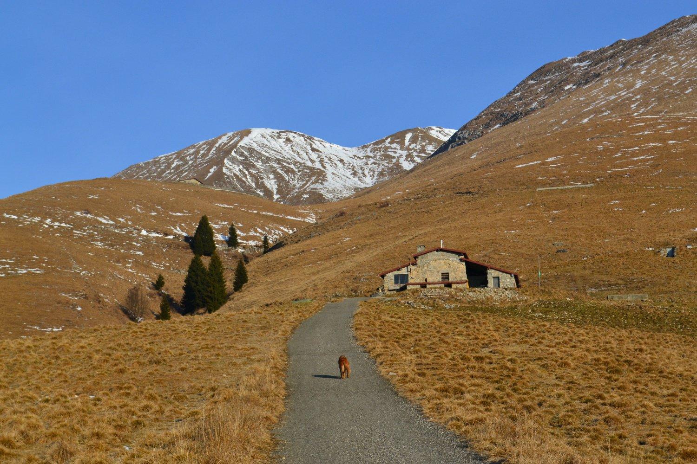 arrivo alla Seconda Baita Alpe Vaccaro