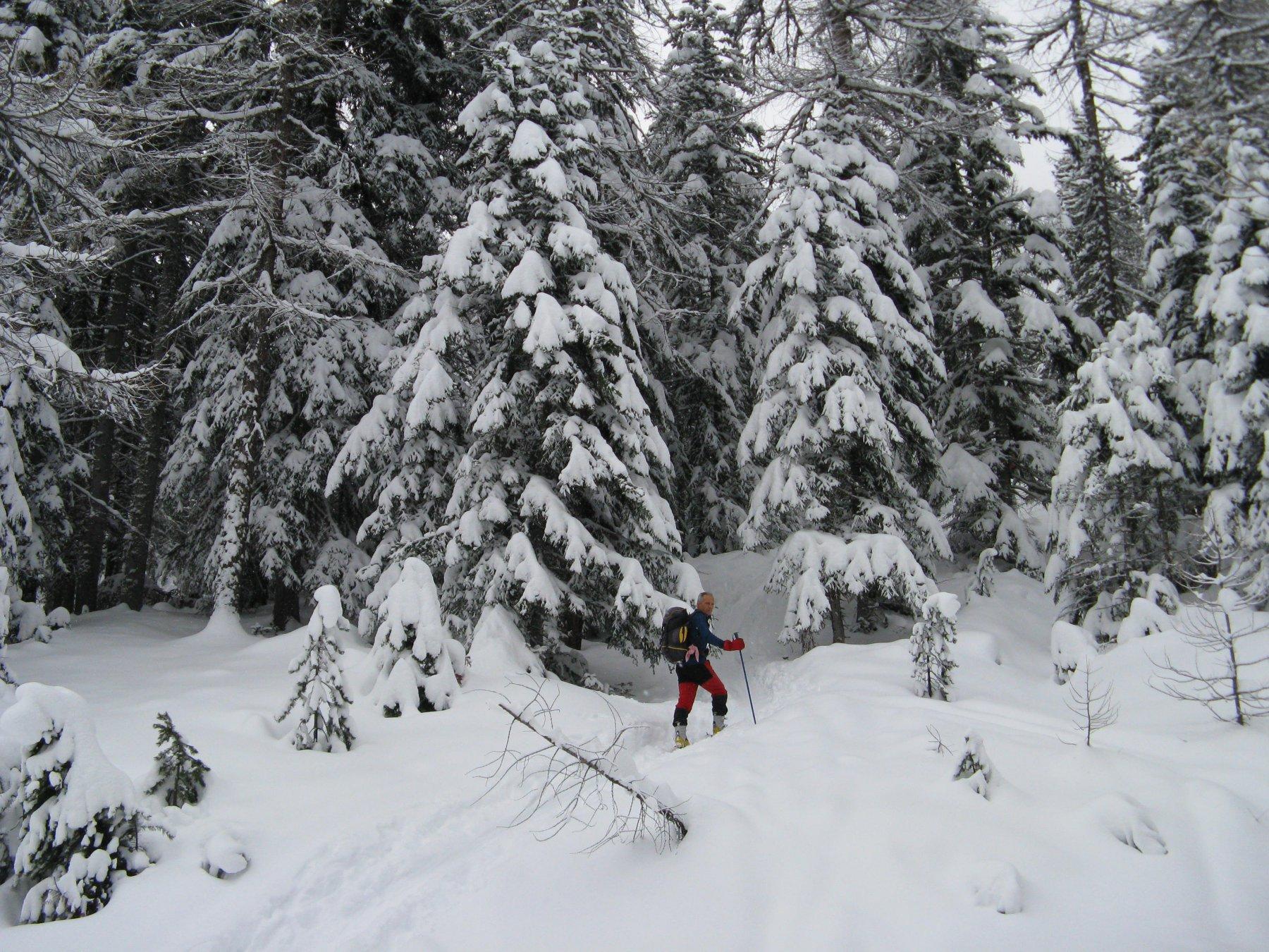 Bel bosco carico di neve