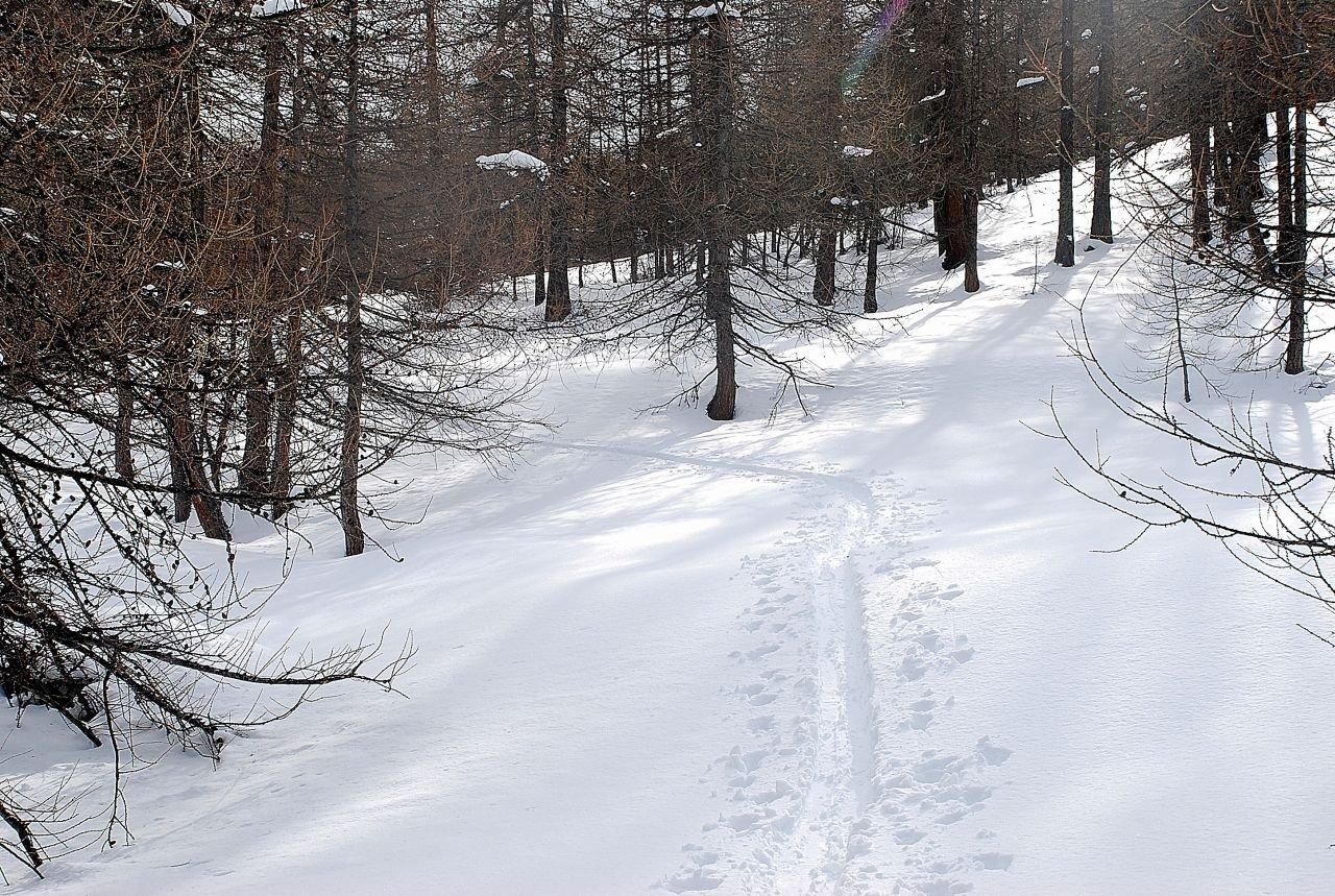 tra boschi e radure
