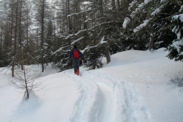 Nel bosco di larici   I   Dans le bois des mélèzes   I   In the larch wood   I   Im Lärchenwald   I   En el bosque de alerces