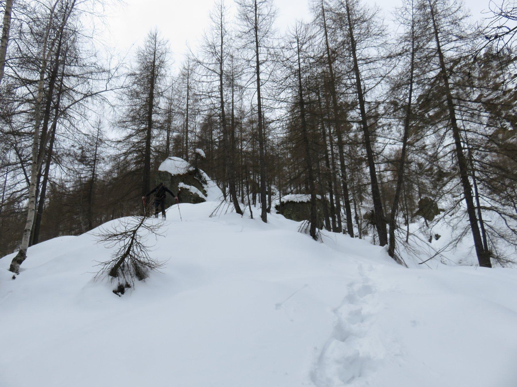 Inizio del tratto bosco con pietraia a grossi blocchi