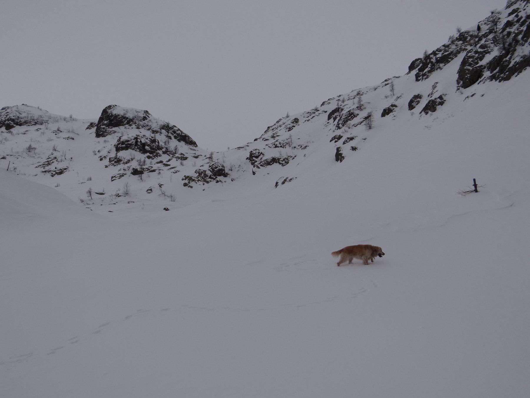 Salendo verso Sella Revelli, accompagnati da Gandalf (il non più giovane) e da qualche fiocco di neve