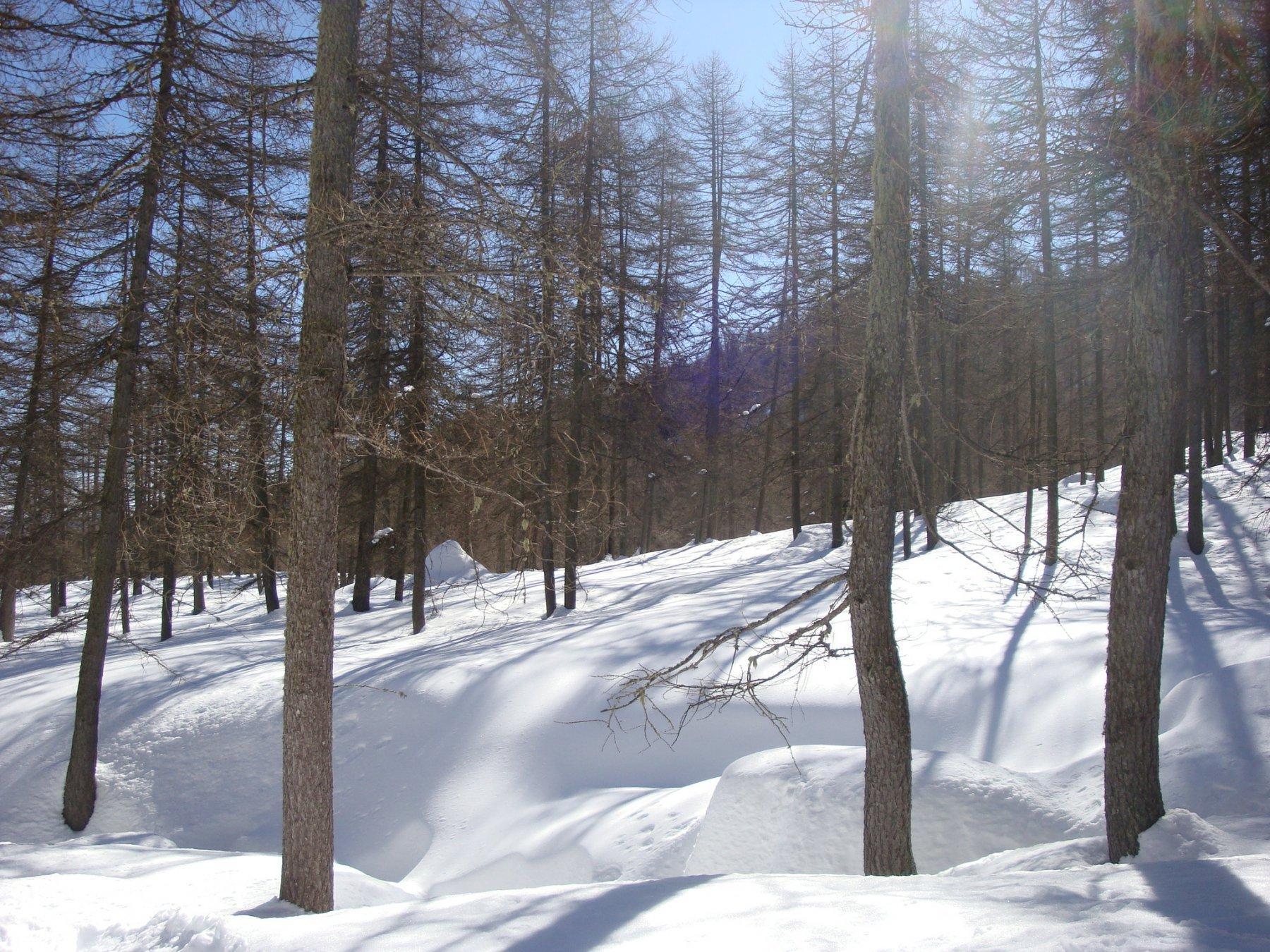 bosco delle Navette1