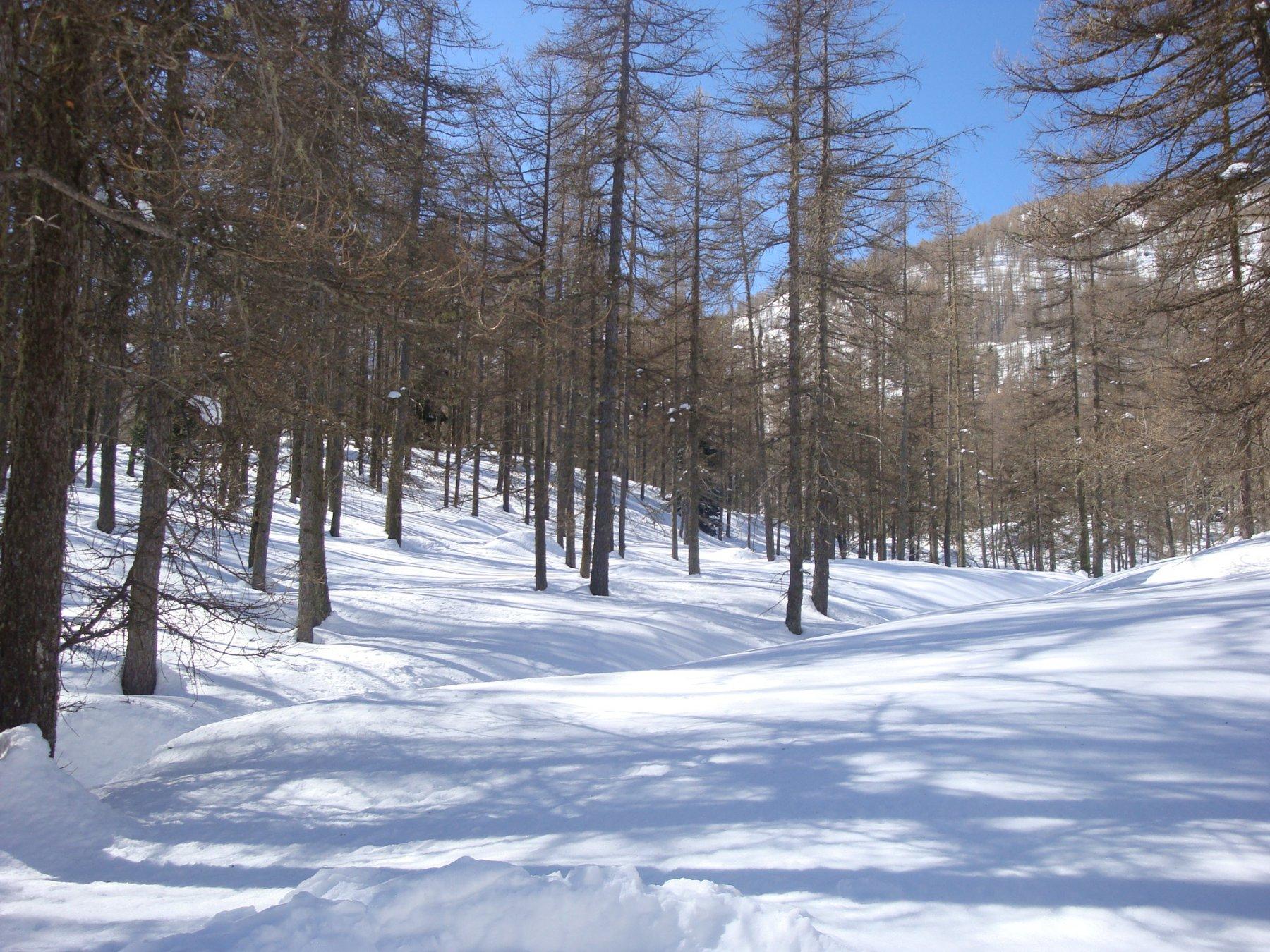 Bosco delle Navette2