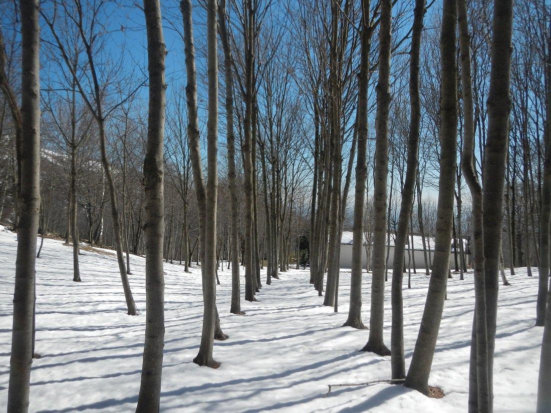 bosco finale, pian Rinè