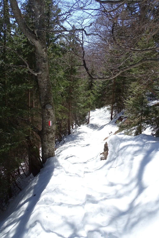 tratto di sentiero nel bosco