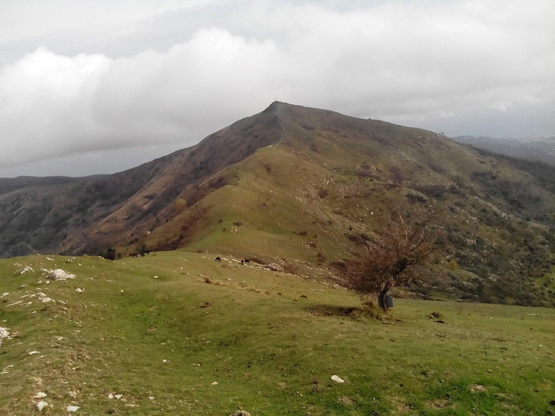 Evigno (Pizzo d') o Monte Torre dalla Madonetta per i Passi San Giacomo e la Colla 2016-03-29