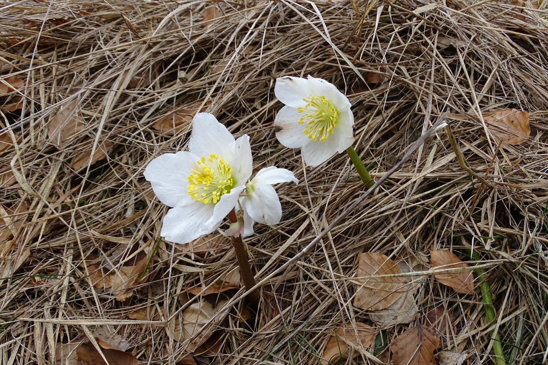 prime fioriture stagionali