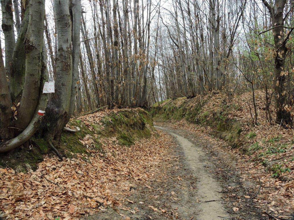 Tratto del percorso su pista forestale