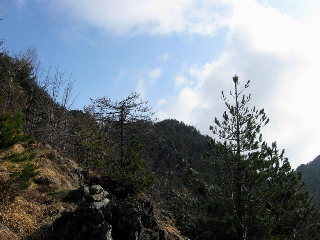 Monte Bellacomba