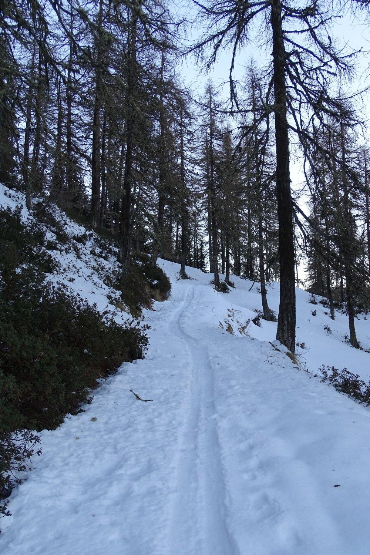 traccia di salita nel bosco