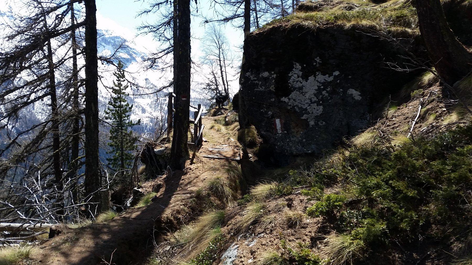 Un tratto del sentiero 20b per Baulin