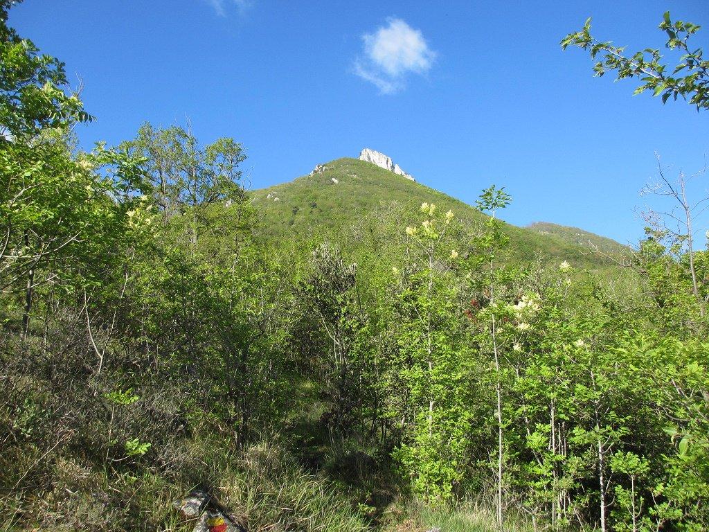 Salendo nel bosco al M.Alpe est