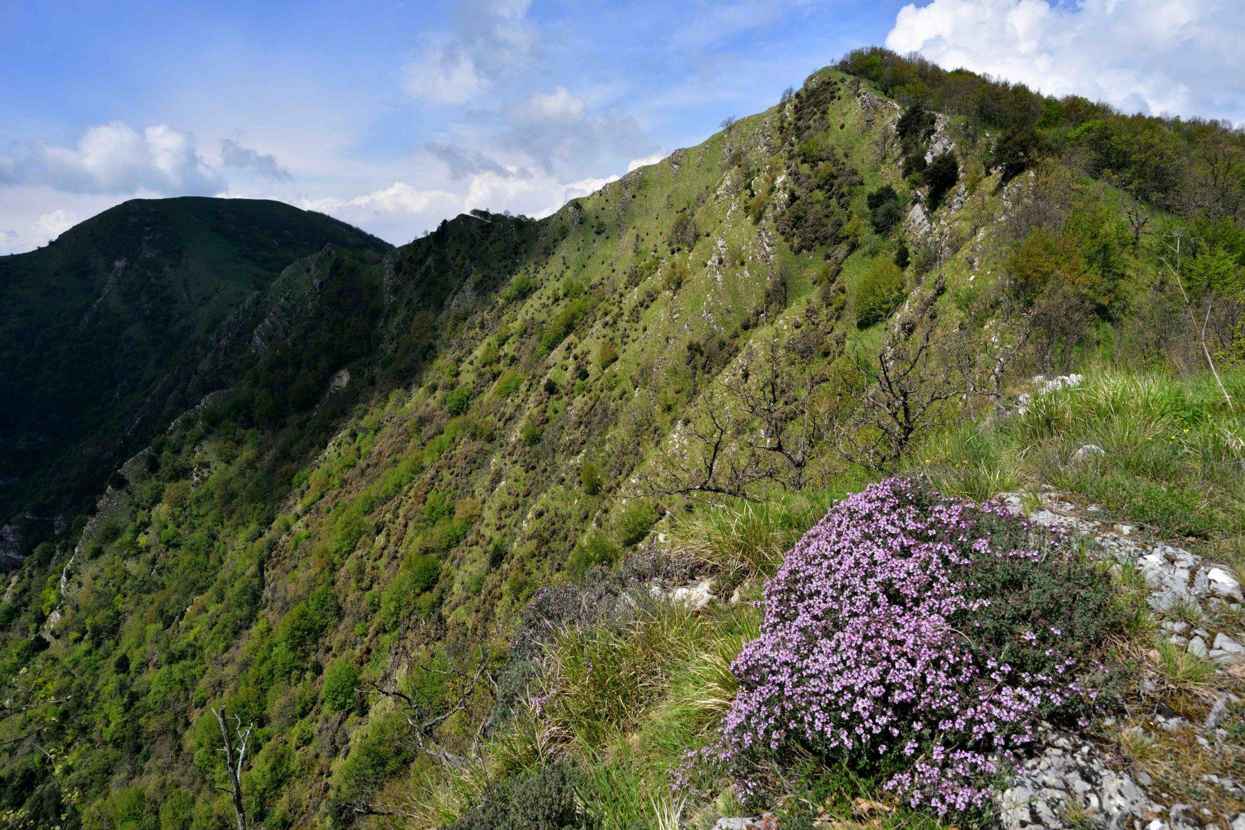 La cresta verso il M.Lago e l'Alpesisa.