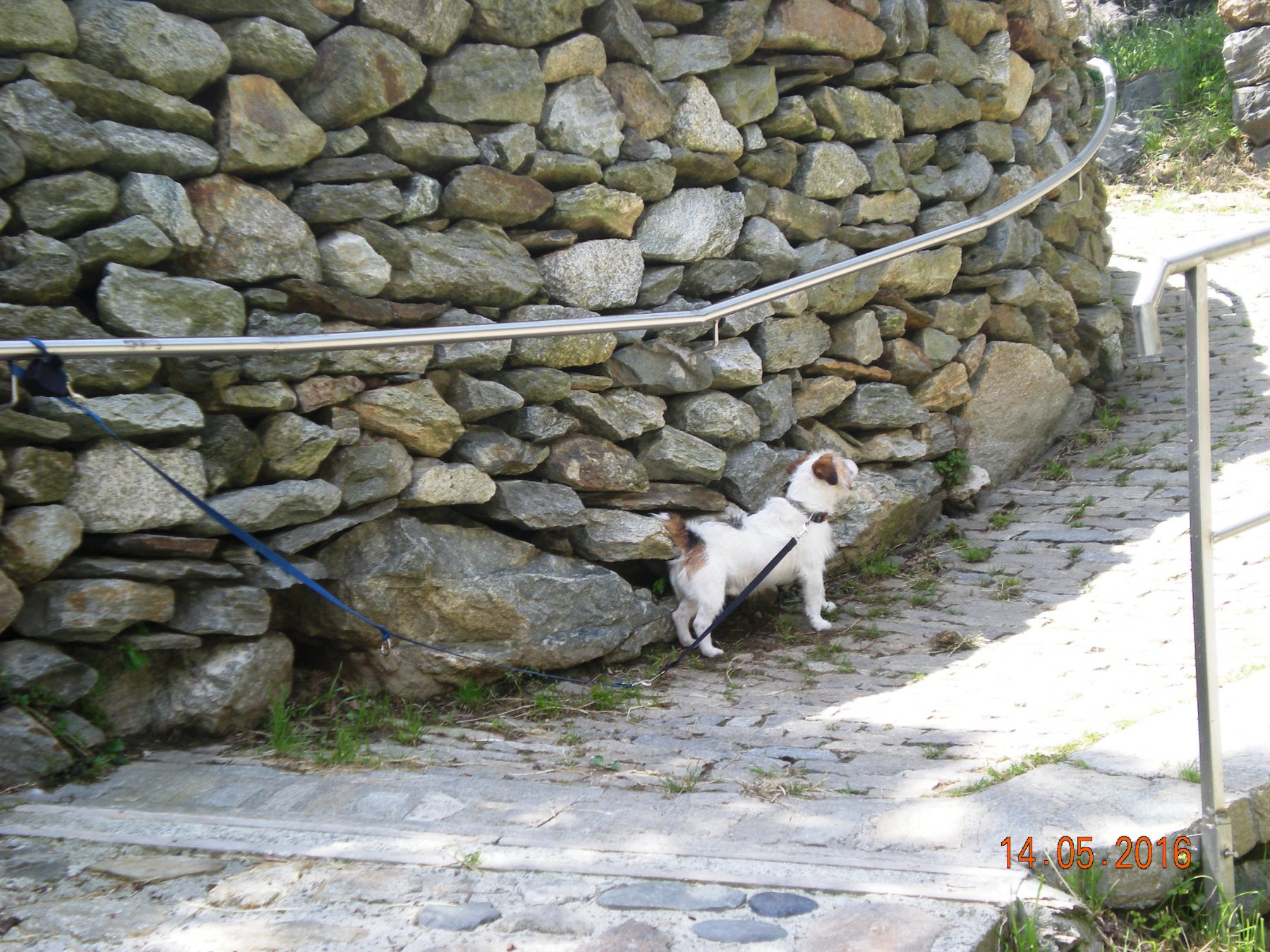 il cagnolino lasciato legato ad Albard per arrampicare tranquilli!!!