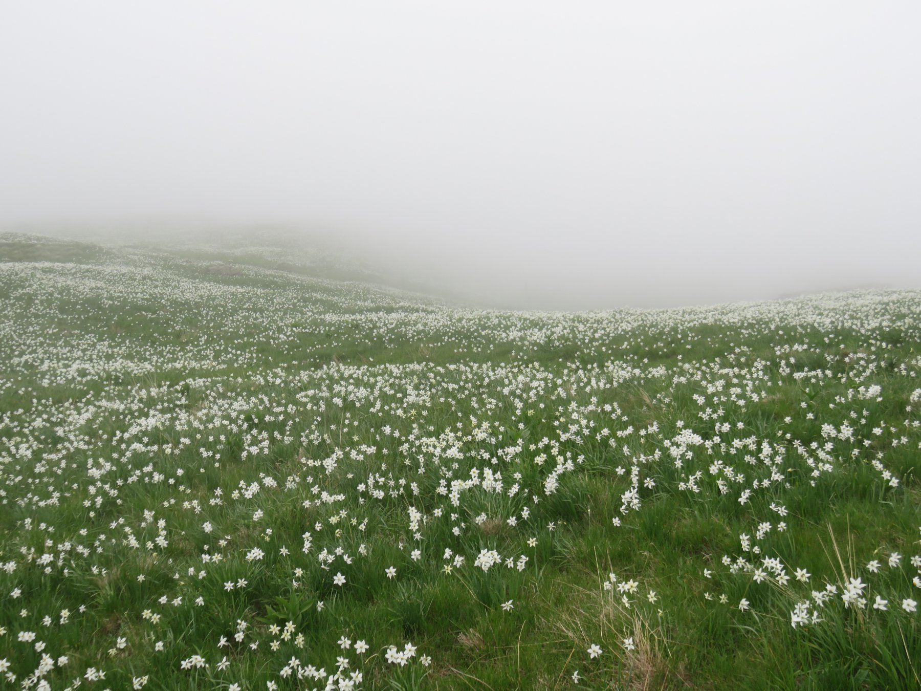 Nebbia anche a Vasivressa