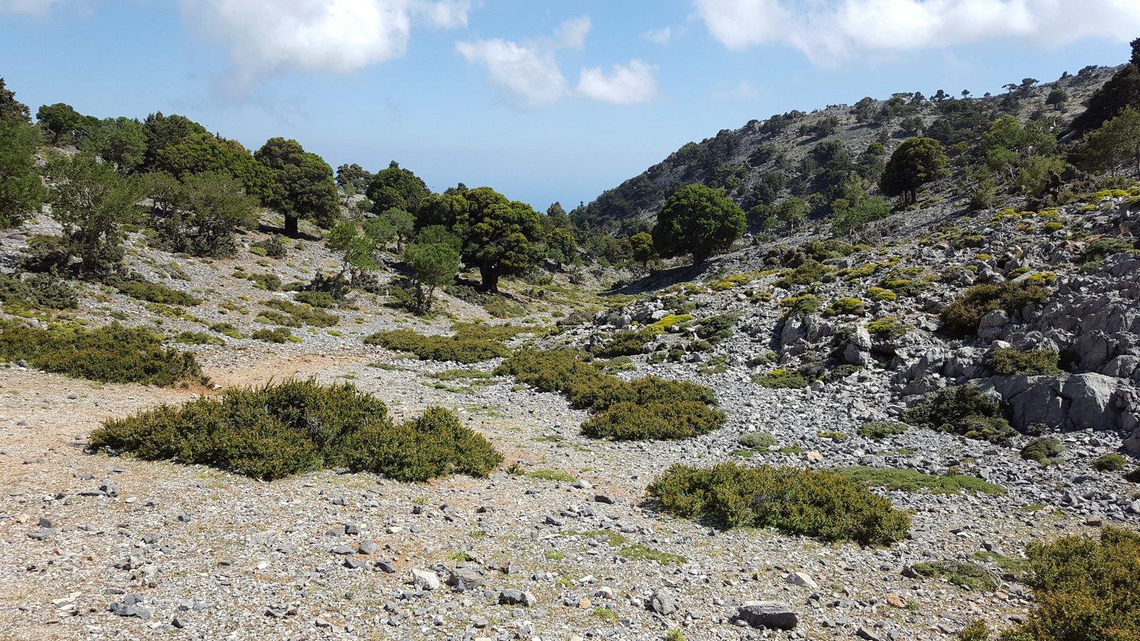La valle si restringe e diventa progressivamente piu' vegetata.