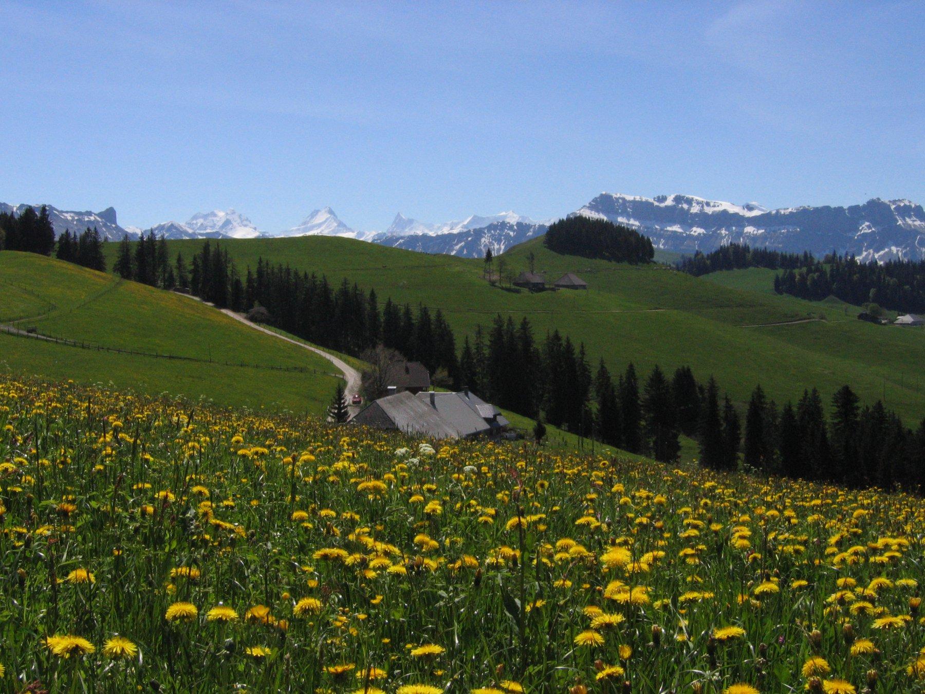 Vista sui 4000 dell'Oberland
