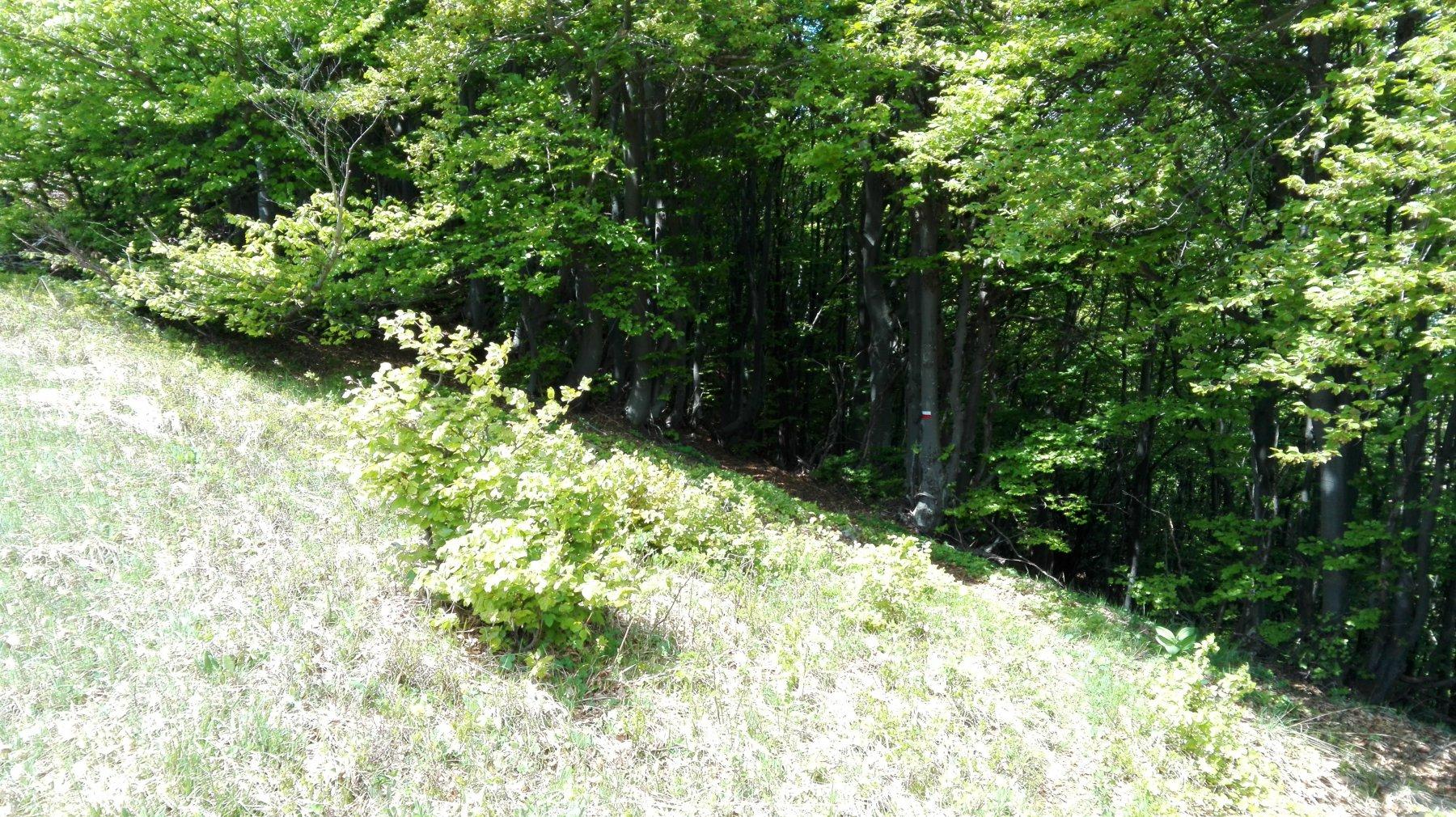 ultimo tratto nel bosco...