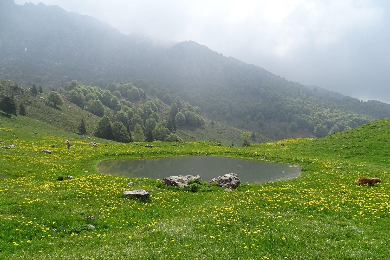 laghetto nei pressi della Baita de Sura tra numerose fioriture di tarassaco