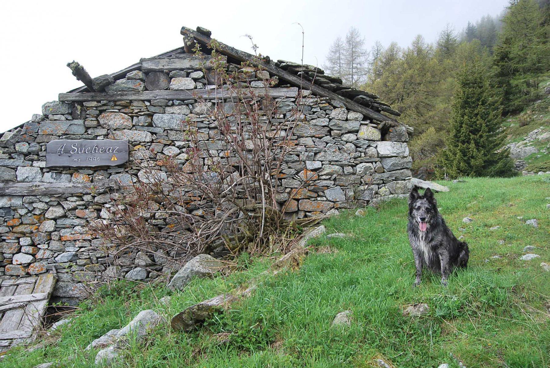 Agli Alpeggi di Sucheaz