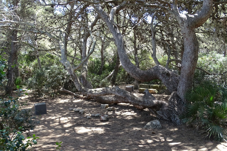 lo spiazzo per picnic nella pineta
