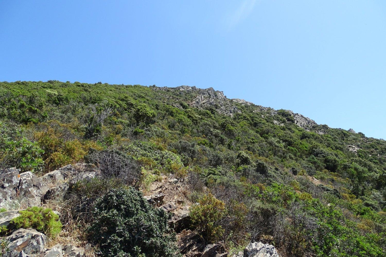 la traccia si snoda nella bassa vegetazione arbustiva