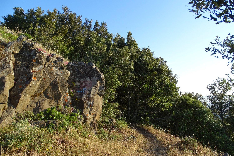 l'ingresso del boschetto prima della cima