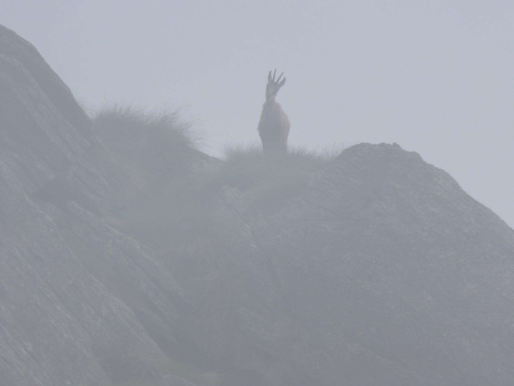 Qualcuno, nella nebbia, ci osserva incuriosito!