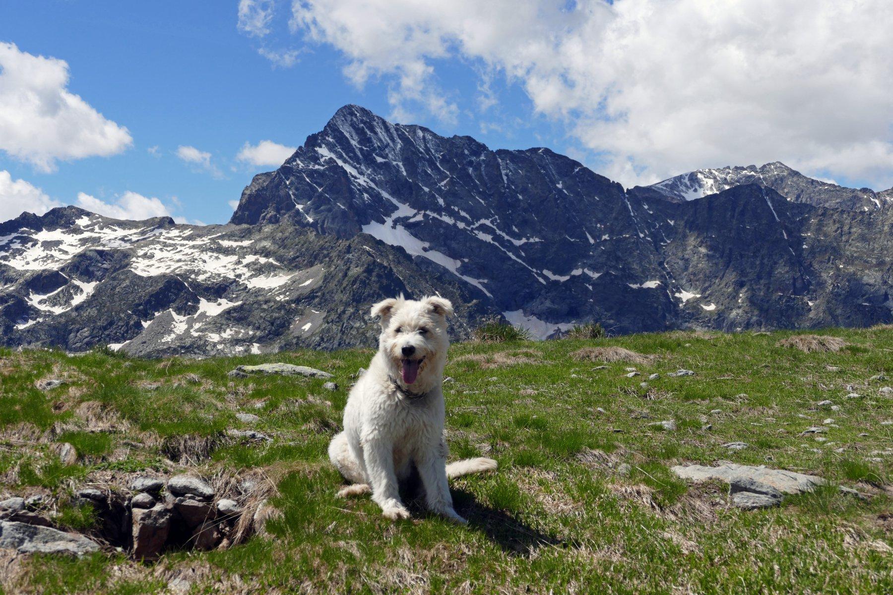 Buck e il monte Matto sullo sfondo