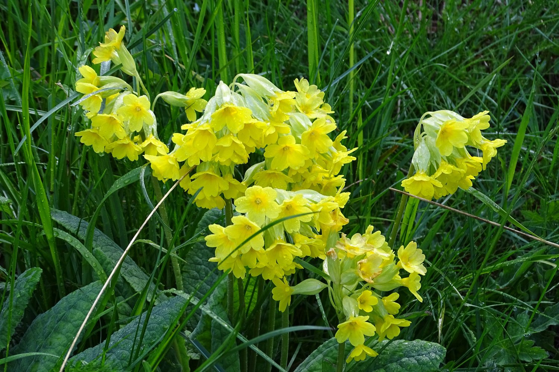 una delle numerose fioriture lungo il percorso
